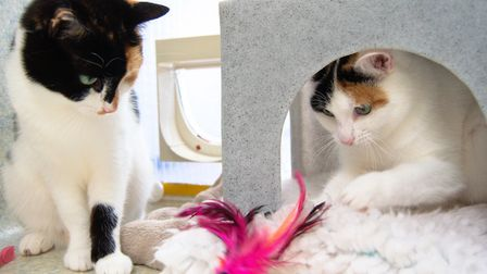 Cathy and Calli are playful females needing to be rehomed together. Picture: Volunteer photographer