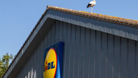 A stork on the roof at Lidls in Sidmouth. Ref shs 38 19TI 0689. Picture: Terry Ife