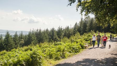 The Discovery Trail at Haldon Forest Park. Picture: Simon Stuart-Miller Photography