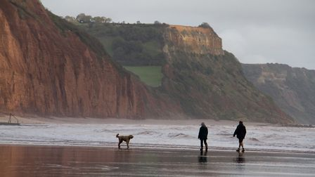 Doggy Dash on Sidmouth beach. Ref shs 40 19TI 1973. Picture: Terry Ife