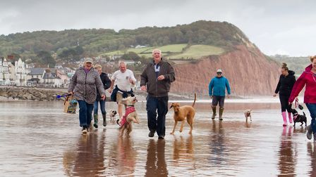 Doggy Dash on Sidmouth beach. Ref shs 40 19TI 1959. Picture: Terry Ife