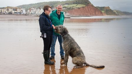 Doggy Dash on Sidmouth beach. Ref shs 40 19TI 1949. Picture: Terry Ife