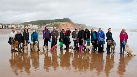 Doggy Dash on Sidmouth beach. Ref shs 40 19TI 1940. Picture: Terry Ife