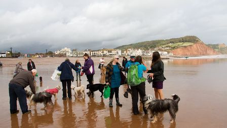 Doggy Dash on Sidmouth beach. Ref shs 40 19TI 1928. Picture: Terry Ife