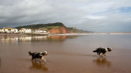 Doggy Dash on Sidmouth beach. Ref shs 40 19TI 1918. Picture: Terry Ife