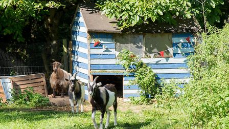 Chickens and goats are just some of the animals kept on the farm. Picture: Alex Walton