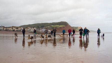 Doggy Dash on Sidmouth beach. Ref shs 40 19TI 1957. Picture: Terry Ife
