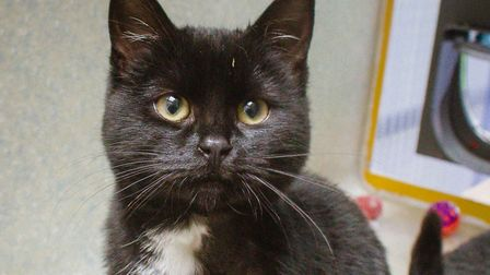 Biddy, a young cat needing a home. Picture: B Blyth