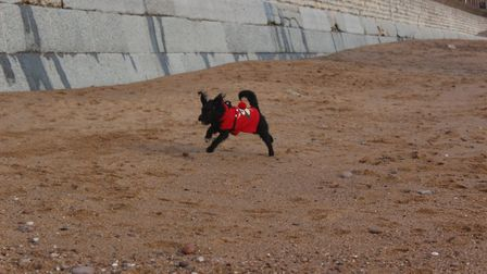 Toto and the 'Sidmouth sniffers' on the beach. Picture: Samantha Francesca Statham