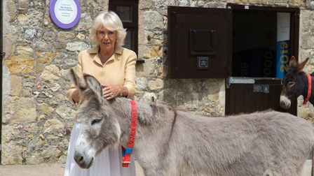HRH The Duchess of Cornwall visits The Sidmouth Donkey Sanctuary. Ref shs 29 19TI 9268. Picture: Ter