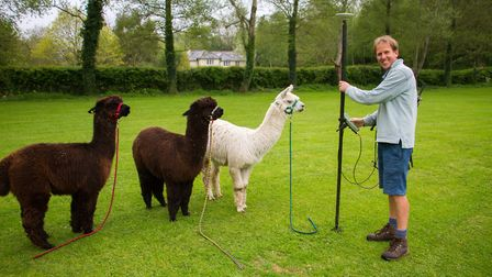 Alick Russell marks the spot at the Sidbury cricket Alpaca fundraising event. Ref shs 18 19TI 3631.