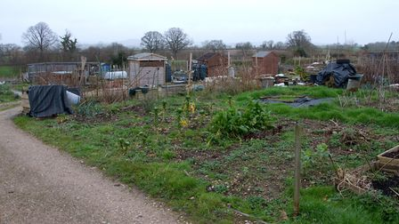 Ottery allotments. Ref sho 02 20TI 7008. Picture: Terry Ife
