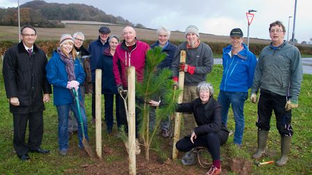 Sidmouth Arboretum and Sidmouth Town Council plant a Monterey pine (grown from seed from the one at