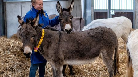 Unit supervisor Kerry Layton-Hill with some donkeys in the unit. Picture: Edoardo Santangelo