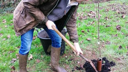 Planting of the new Ottery Community Orchard. Picture: Emma Grainger/Greener Ottery