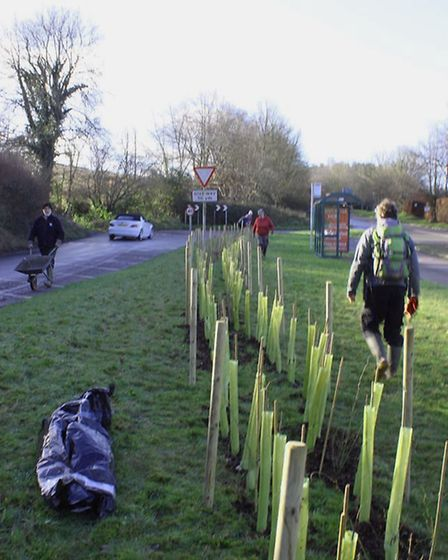The first tree planting of 2020 in Sidmouth. Picture: Sidmouth Arboretum