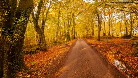 Woodland near East Hill. Picture: Brian Westaway