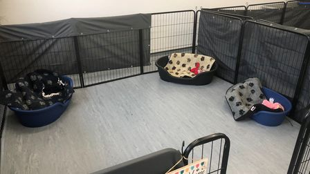 Daycare facilities at The Scruffy Paw. Picture: Michelle Taylor