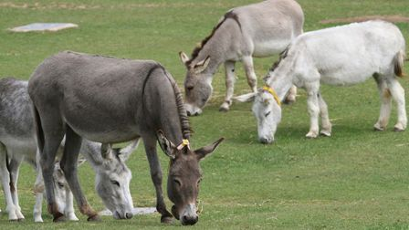 The Donkey Sanctuary is temporarily closed as a precaution due to the Coronavirus. Picture: Simon Ho