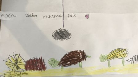 Another of Issy's animal drawings. Picture:Katherine Ashbullby