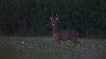 Sidmouth Wildlife. Picture: Mark Taylor Hutchinson