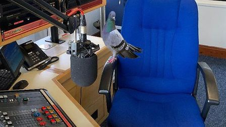 The bird who wants to be a radio DJ. Picture: Stuart Hughes