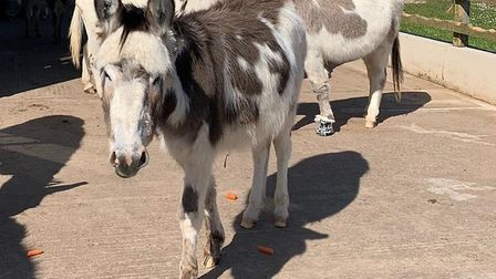 Carrots were donated by Waitrose. Picture: Simon Horn