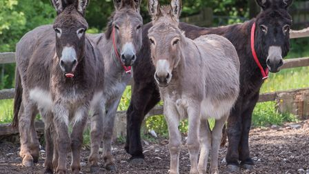 Picture: The Donkey Sanctuary