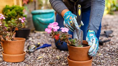 Gardening Picture: Getty Images