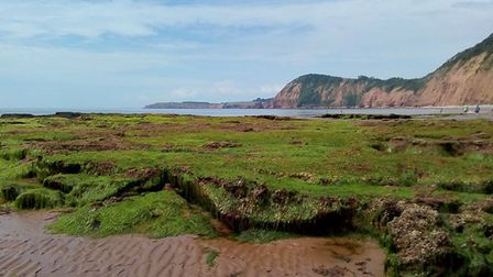 Rockpools in Sidmouth. Picture: Mary Walden-Till, Vision for Sidmouth