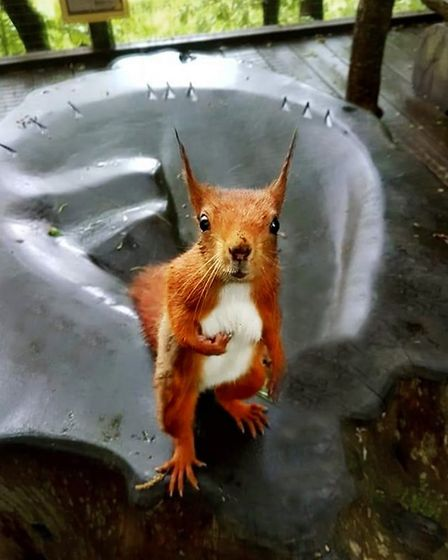 Red squirrels come up close at Wildwood Escot. Picture: Wildwood Escot