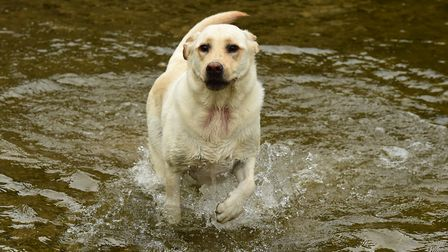 A dog frolicking in water. Picture: Getty Images
