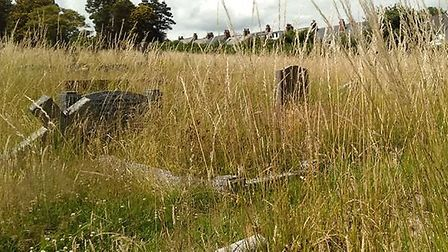 Overgrown graves at Sidmouth Cemetery. Picture: Jenny Ware