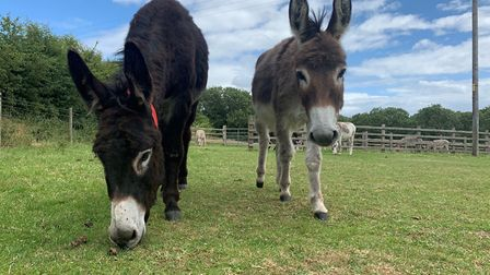 Bill and Ralph at the Sidmouth sanctuary. Picture: The Donkey Sanctuary