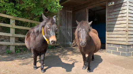 Mule and pony - Lola and Roxy at shelter five (mother and daughter). Picture: The Donkey Sanctuary
