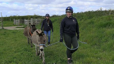 Clare and Georgina walking Seamus and RJ to their new home in Shelter 3. Picture: The Donkey Sanctua