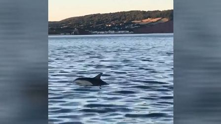 A pod of dolphins have been spotted off the coast of Sidmouth. Picture: Alex McLachlan