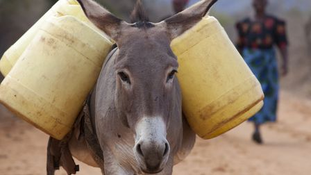 Jaditha Mwinzi owns 4 donkeys which carry water for her family and her livestock. They also bring he