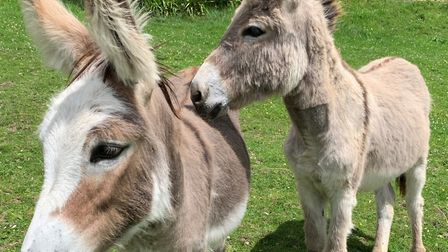 'Royal' foal Sweet Pea and her friend, orphaned foal Sam. Picture: Simon Horn