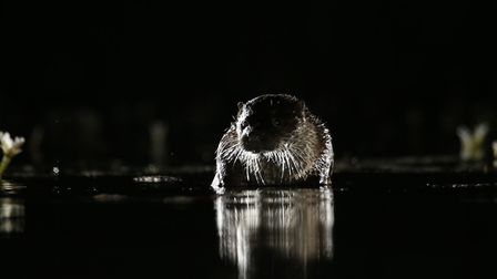 Off-camera flash was used to capture this photo of an otter. Picture: Mark Taylor Hutchinson