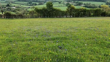 A meadow at the farm. Picture: Bronwen Gundry