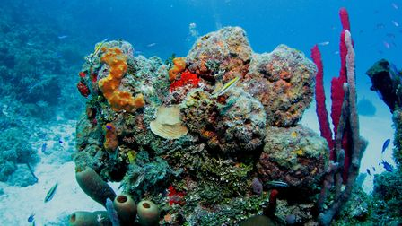 An unspoiled reef. Picture: Mark Taylor Hutchinson