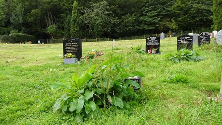 A reader's photo showing weeds almost covering some graves at Sidmouth Cemetery. Picture: Trevor Hey