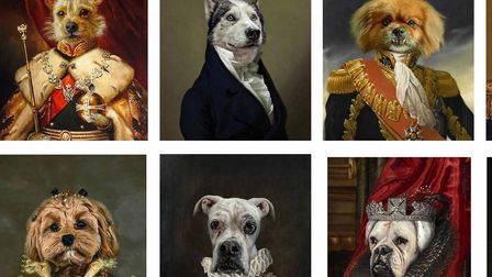 Some of the dog portraits created by Luke Emery's business. Picture; Luke Emery