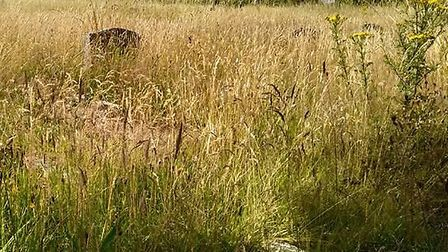 Overgrown grass and weeds at Sidmouth Cemetery. Picture:Jenny Ware