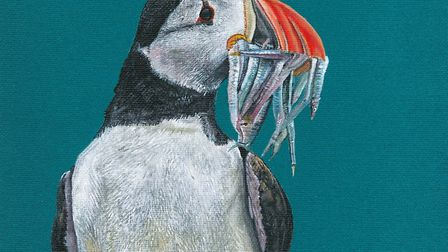 A bold picture of a Puffin created by Mark Taylor Hutchinson Picture: Mark Taylor Hutchinson