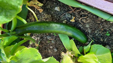 A variety of fresh fruits, vegetables and flowers are growing in the garden.Picture: Harbour Residen