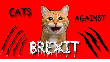 A ginger cat features on some of the UCAT election materials. Picture: Peter Cook