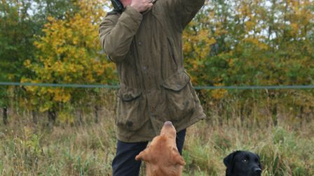 Go through Howard's checklist to see if your dog is ready for the peg