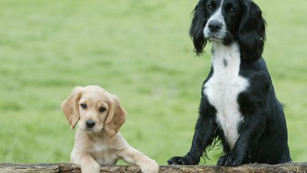 Let your puppy socialise with dogs that are well-balanced, well-trained and friendly